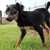 Meet Melanie, Blue Ribbon News Pet of the Week