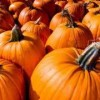 Leo's Club hosts Pumpkin Patch fundraiser