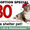 Adoption fees reduced at Dallas Animal Services