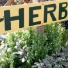 Free gardening classes at Covington's Nursery