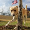 Meet Uggs, Blue Ribbon News Pet of the Week