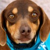 Meet Jake, Blue Ribbon News Pet of the Week
