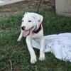 Meet Kira, Blue Ribbon News Pet of the Week