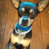 Meet Pancho, Blue Ribbon News Pet of the Week