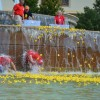 RE-CAP & PHOTOS: Community flocks to Rockwall Harbor to 'Give a Duck'