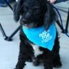 Meet Mr E, Blue Ribbon News Pet of the Week