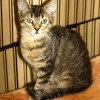 Meet Sophie, Blue Ribbon News Pet of the Week