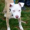Meet Eunice, Blue Ribbon News Pet of the Week