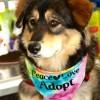Meet Eleanor-Haley, Blue Ribbon News Pet of the Week