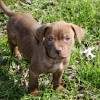 Meet Hershey, Blue Ribbon News Pet of the Week