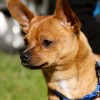Meet Tuco, Blue Ribbon News Pet of the Week
