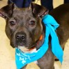 Meet Poppy, Blue Ribbon News Pet of the Week