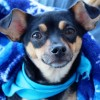 Meet Beatrice, Blue Ribbon News Pet of the Week