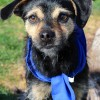 Meet Jack, Blue Ribbon News Pet of the Week