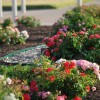 Rockwall's EarthKind Trial Gardens a blooming success