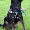 Meet Sweet Baby James, Blue Ribbon News Pet of the Week