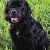 Meet Jet, Blue Ribbon News Pet of the Week