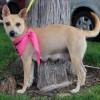 Meet Sidney, Blue Ribbon News Pet of the Week