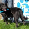 Meet Hot Chocolate, our Blue Ribbon News Pet of the Week