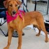 Meet Rani, Blue Ribbon News Pet of the Week