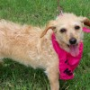 Meet Stormy, Blue Ribbon News Pet of the Week