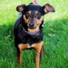 Meet Whitney, Blue Ribbon News Pet of the Week