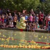 Race for cash & prizes at Rockwall Rubber Duck Regatta
