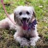 Meet Grover, Blue Ribbon News Pet of the Week