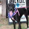 Meet Diva, Blue Ribbon News Pet of the Week
