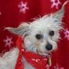 Meet Beltre, Blue Ribbon News Pet of the Week