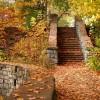 Autumn Speaks