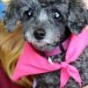 Meet Charlotte, Blue Ribbon News Pet of the Week