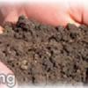 Soil testing helps your landscape look it's best