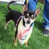 Meet Sarge, Blue Ribbon News Pet of the Week