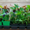Spring Plant and Seed Swap April 9