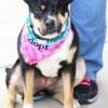 Meet Leela, Blue Ribbon News Pet of the Week
