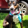 Meet Sabira, Blue Ribbon News Pet of the Week