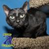 Rowlett Pet Spotlight: Midnight