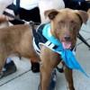 Meet Kodiak, Blue Ribbon News Pet of the Week