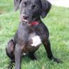 Meet Adeline, Blue Ribbon News Pet of the Week