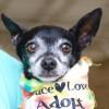 Meet Joey, Blue Ribbon News Pet of the Week