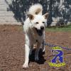 Rowlett Pet Spotlights: Dallas and Mathis