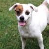 Meet Eddie, Blue Ribbon News Pet of the Week