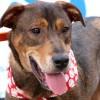 Meet Tayt, Blue Ribbon News Pet of the Week