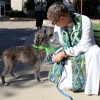 Blessing of the Animals at First Presbyterian Rockwall