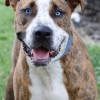 Meet Jerzy, Blue Ribbon News Pet of the Week