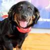 Meet Ziggy, Blue Ribbon News Pet of the Week