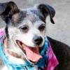 Meet Betty White, Blue Ribbon News Pet of the Week