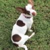 Meet Abigail, Blue Ribbon News Pet of the Week