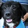 Meet Grimm, Blue Ribbon News Pet of the Week